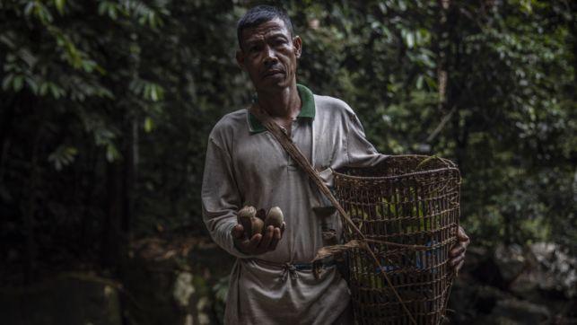 Forestwise Wild-Harvested Rainforest Ingredients