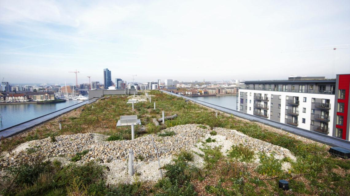 Green roof Centenary quay Southampton