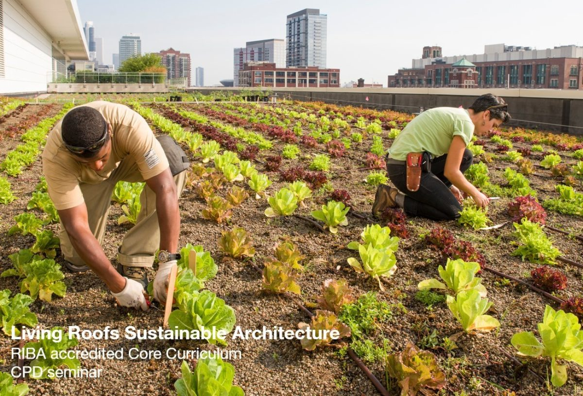CPD page green roofs no logo